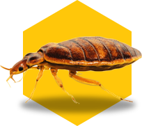 bed bug icon on yellow background