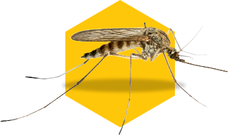 mosquito icon on yellow background