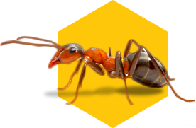 ant control icon on yellow background