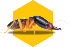 termite icon on yellow background